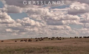 Grasslands-documentary.